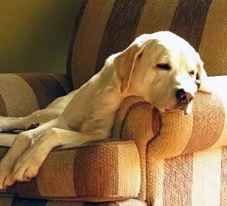 возрастные изменения в психике собаки, поведение собаки в старости, булимия у собаки, попрошайничество собаки, изменение характера собаки, потеря ориентации в пространстве у собаки. нарушение сна у собаки, как ухаживать за пожилой собакой