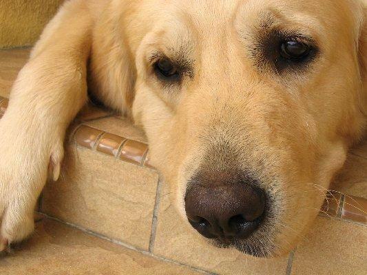 собака умирает, смерть собаки, собака страдает, эвтаназия собаки, усыпление собаки, кремация собаки, похороны собаки