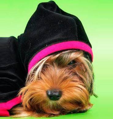 собака-ребенок, кто для вас ваша собака, воспитание собаки, как обращаться с собакой