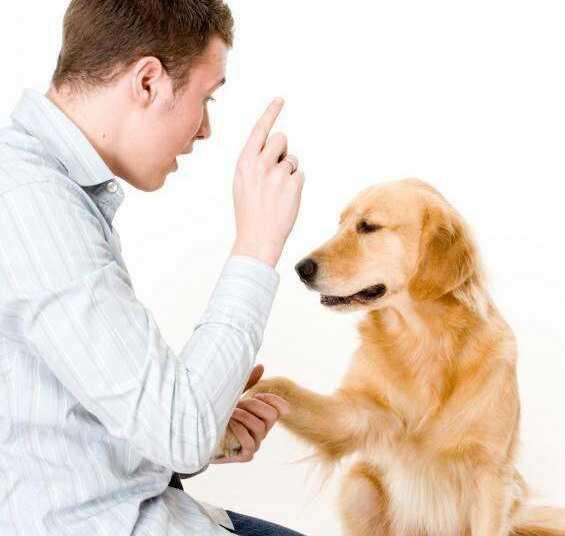 воспитание собаки, как воспитать собаку, правила воспитания собаки, требования к воспитанной собаке