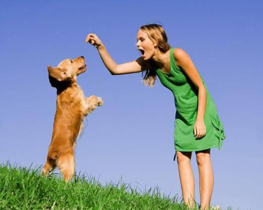проблемы поведения собак, правила поведения собак, воспитание собаки, дрессировка собаки, типичные проблемы поведения собак