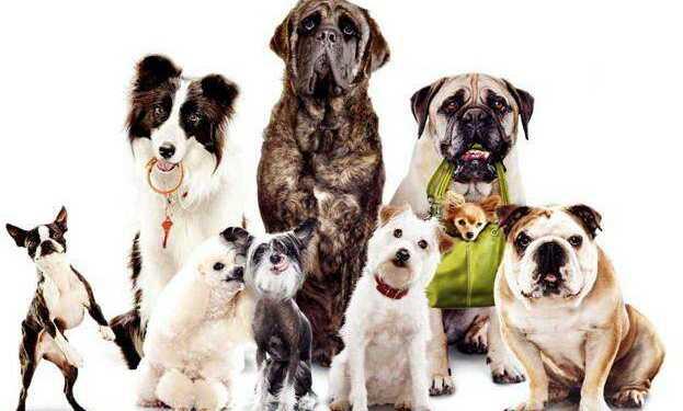 выбор породы собаки, поведенческие особенности собак, породы собак для жизни в семье, энергичные породы собак, породы собак-охранников