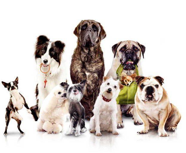 Выбор породы собаки - секреты домашнего груминга