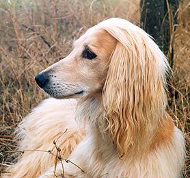 вид собак
