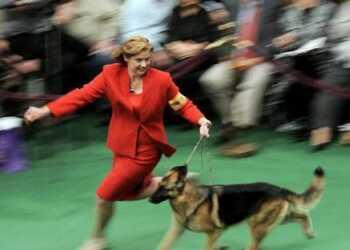 в чем пойти на выставку собак, одежда для выставки собак, одежда хендлера, цвет одежды хендлера, правильная одежда для выставки собак, удобная одежда для выставки собак