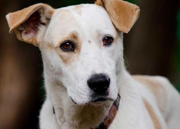 отдаю собаку, аллергия на собаку, переезд с собакой, перевозка собаки в другую страну, проявление агрессии собакой, пожилой возраст собаки, боязнь собственной собаки, смена владельца собаки, отдавать собаку или нет