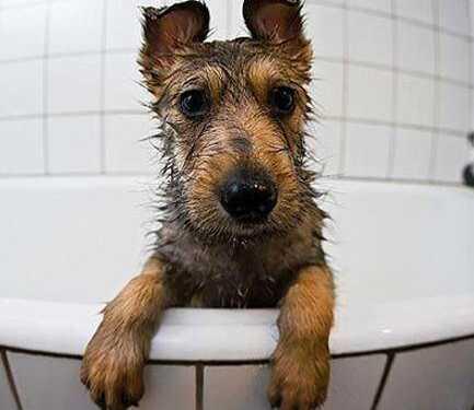 сушит собаку феном, секреты сушки ченом, выбрать компрессор для собаки, как правильно сушить собаку, как ухаживать за шерстью, расчески для собак, держатель для компрессора, профессиональный фен-компрессор