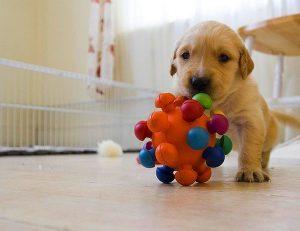 синдром питомника, социализация щенка, содержание щенка, щенок из питомника, причины трусости у щенка, причины агрессии у собаки, проживание собаки в клетке