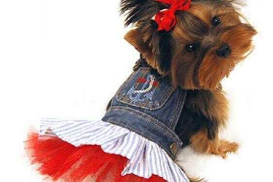 популяризация породы, плюсы популяризации породы, минусы популяризации породы, модные породы, модная собака, мода на собак