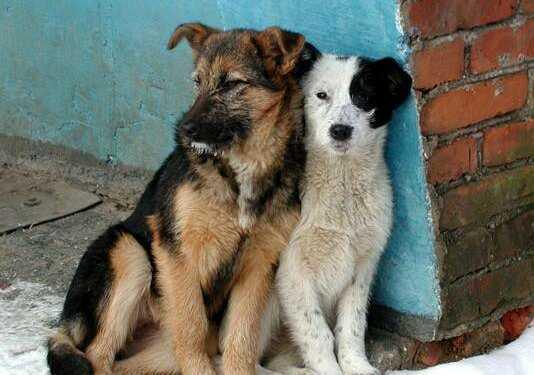 бродячие собаки, бездомные собаки, борьба с бродячими собаками, собачий приют, догхантеры, собачьи волонтеры, стерилизация бездомных собак, собачьи стаи, государственный отлов бездомных животных
