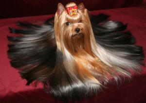 комфортная жизнь с собакой, правила поведения собаки в обществе людей, комфорт проживания с собакой, воспитание собаки, содержание собаки в квартире, собака в городских условиях