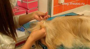 груминг лхаса апсо, инструменты для груминга, груминг стрижка, груминг обучение, выставочный груминг, груминг собак в спб, профессиональный груминг, стрижка лхаса апсо, выставочная стрижка собак, стрижка шерсти в домашних условиях, стрижка когтей, мытье собаки, мытье длинной шерсти, прически для собак