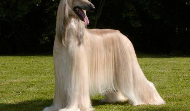 Как стимулировать рост шерсти собаки, уход за шерстью собаки, макси для шерсти, шампунь для шерсти, ролфессиональная косметика для шерсти, шампуни для собак, как мыть собаку, как улучшить шерсть собаке, как отрастить шерсть собаке