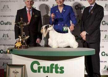 Крафт, crufts, выставка собак, шоу собак, участники Crufts, победители Crufts