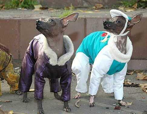 комбинезон для собак, как выбрать комдинезон для собаки, виды комбинезонов для собак, зимний комбез для собаки, дождевик для собаки, плюсы комбинезона для собаки, как приучить собаку к комбинезону, одежда для собак