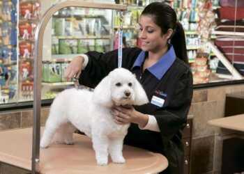 груминг собаки, первый груминг, выбор мастера для груминга, первая стрижка собаки, стрижка шерсти, правила в груминге, мастер по грумингу, стрижка собаки в салоне, косметика для собак