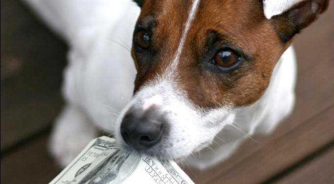 налог на животных, налог на собак, когда введут налог на собак, налог на собак в России, налог на собак в Германии, налог на собак в Испании, налог на животных в Европе