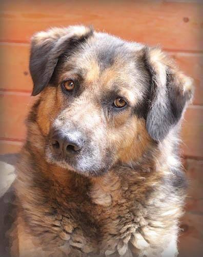 породы собак, дворняги, дворняжка, как выбрать дворняжку, породистая собака, верные дворняги, здоровье дворняг, умные ли дворняги, как выбрать собаку, купить собаку