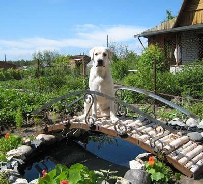 собака на даче, опасности для собаки на даче, собака собирается на дачу, что взять на дачу для собаки,