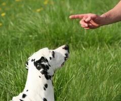 методы воспитания собаки, как нельзя обращаться с собакой, как воспитывать щенка, поведение взрослой собаки, правила дрессировки собаки, щенок в доме, воспитание взрослой собаки, дрессировки собаки
