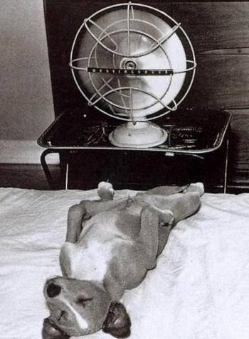 Собака и кондиционер