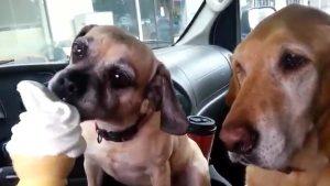 dog-conditioning2