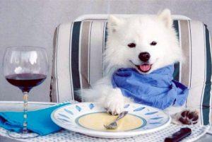 dog-eats