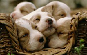 116-feed-cute