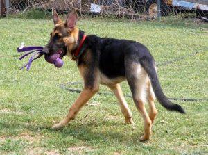 117-thin-dog-3
