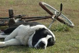 139-dog-bicycle-2