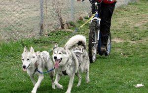 139-dog-bicycle-3