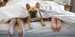 167-dog-of-sleeping2