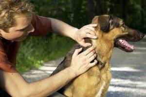 Как правильно обработать собаку от клещей