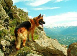 С собакой в поход