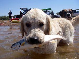 Можно ли собакам рыбу?