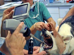 Собака проглотила инородное тело — что делать?