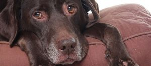 У собаки идет кровь из носа — почему так бывает и что предпринять?