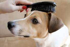 Хитрости и тонкости ухода за шерстью собаки