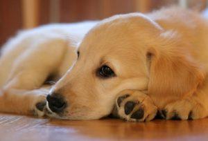 Болезни суставов у собак