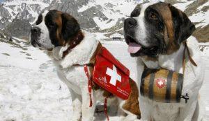 Собаки-спасатели — четвероногие ангелы ПСС