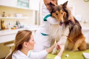 Как подготовить собаку к вязке