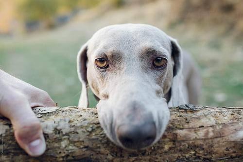 Собака-бобер или как бороться с поеданием палок