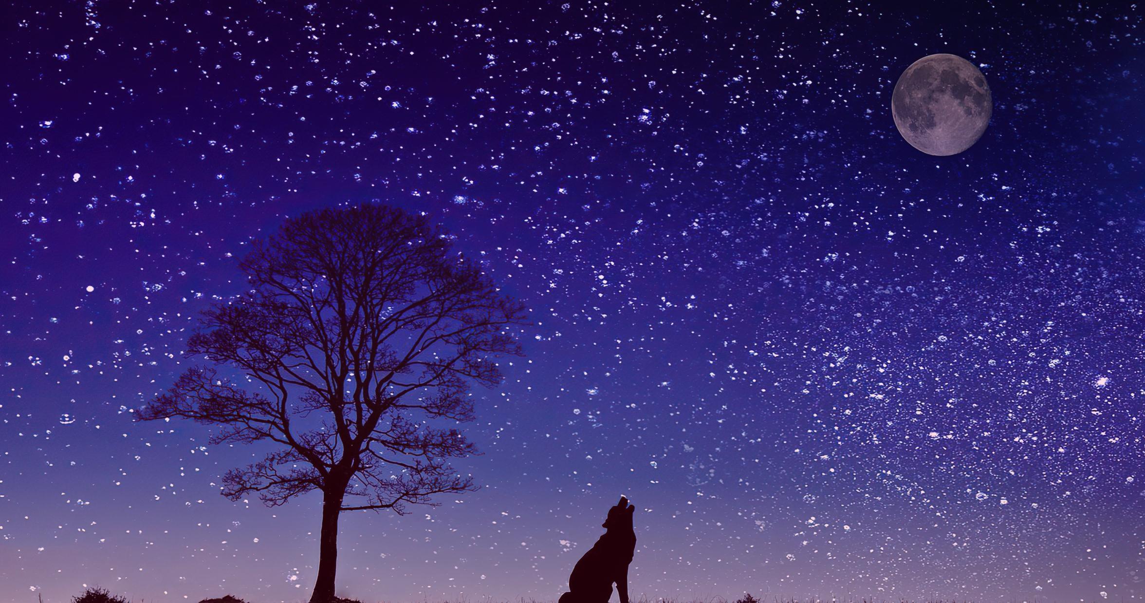 Причины воя собаки по ночам